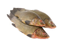 Raw tench isolated Stock Photos