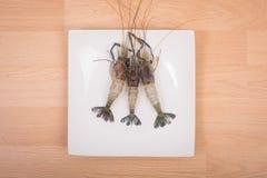 Raw tiger Fresh shrimps on white dish Stock Image