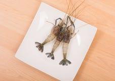 Raw tiger Fresh shrimps on white dish Stock Photos