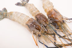 Raw tiger Fresh shrimps on white dish Royalty Free Stock Images