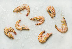 Raw tiger prawns on chipped ice over light grey background Stock Photography