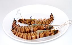 Raw tiger prawns royalty free stock images