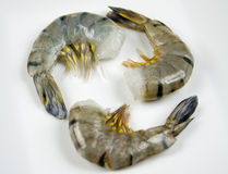 Raw Tiger Shrimp Stock Photo