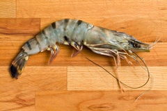 Raw tiger shrimp Royalty Free Stock Image
