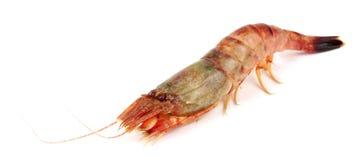 Raw tiger shrimp on white. Isolated on a white background. Stock Photos