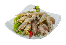 Raw tiger shrimps Royalty Free Stock Photo