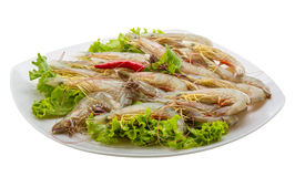 Raw tiger shrimps Stock Photo