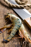 Raw tiger shrimps Stock Images