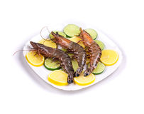 Raw tiger shrimps on plate. Stock Photos