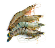 Raw tiger shrimps Stock Image