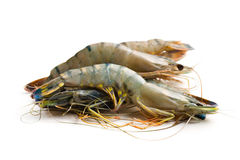 Raw tiger shrimps Stock Photo