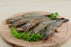 Raw tiger shrimps Stock Photography