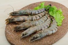 Raw tiger shrimps Royalty Free Stock Image