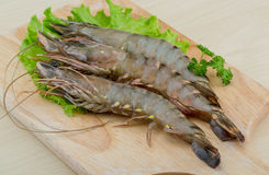 Raw tiger shrimps Royalty Free Stock Photography