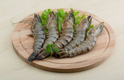 Raw tiger shrimps Royalty Free Stock Images