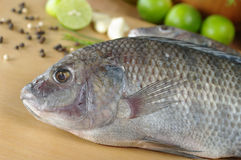 Raw Tilapia Fish Stock Photo