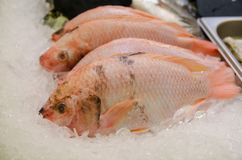 Raw Tilapia fish for sale stock photography
