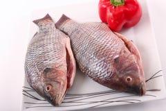 Raw Tilapia fish. On white plate Stock Image