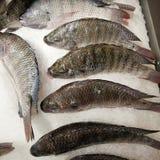 Raw tilapia fishes Royalty Free Stock Photos