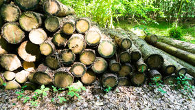 Raw timber. In the forest Royalty Free Stock Photos