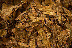 Raw tobacco close up Royalty Free Stock Images
