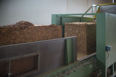 Raw tobacco in factory line Stock Photos
