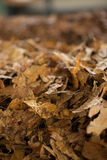 Raw tobacco getting ready in factory line Stock Photo