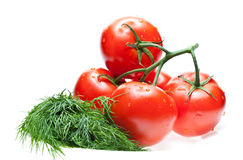 Raw tomatoes and dill Royalty Free Stock Photos