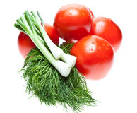 Raw tomatoes, dill and green spring onion Stock Photography