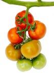 Raw tomatos Royalty Free Stock Images