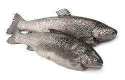 Raw trout Royalty Free Stock Image
