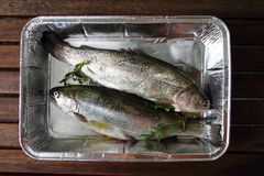 Raw trout fish Royalty Free Stock Photo