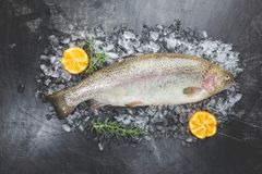 Raw trout fish. On ice with rosemary and lemon over stone dark background , top view royalty free stock images