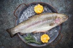 Raw trout fish. On ice with rosemary and lemon over stone dark background , top view royalty free stock photo