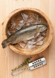 Raw trout fish with ice Stock Image