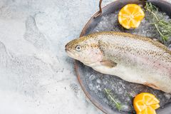 Raw trout fish. On the tray with ice with rosemary and lemon over stone light background , top view royalty free stock images