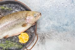 Raw trout fish. On the tray with ice with rosemary and lemon over stone light background , top view stock photo