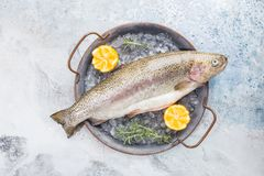 Raw trout fish. On the tray with ice with rosemary and lemon over stone light background , top view stock photography