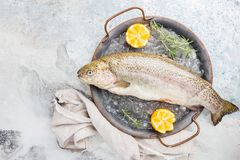 Raw trout fish. On the tray with ice with rosemary and lemon over stone light background , top view royalty free stock photography