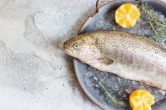 Raw trout fish. On the tray with ice with rosemary and lemon over stone light background , top view stock images