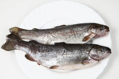 Raw trout fishes Royalty Free Stock Photos