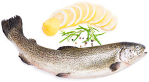 Raw trout Stock Photos