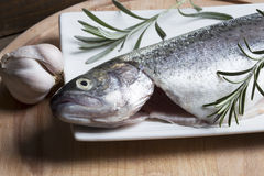 Raw trout Royalty Free Stock Photos