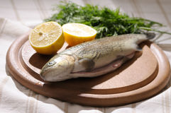 Raw trout with lemon and dill Stock Photo