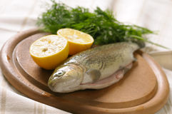 Raw trout with lemon and dill Royalty Free Stock Photos