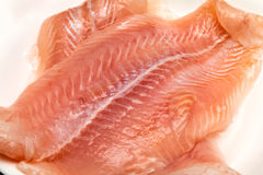 Raw trout meat Royalty Free Stock Photo