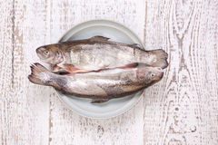 Raw trout. On the plate Stock Photos