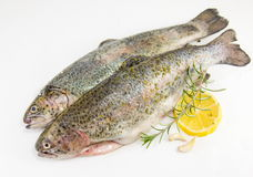 Raw trout on white background Stock Photography