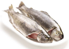Raw trouts on a plate ready to cook Royalty Free Stock Images