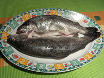 Raw trouts on a plate ready to cook. Two raw trouts on a plate, ready for cooking Stock Images